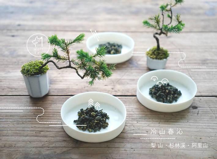 2016高山春茶上市
