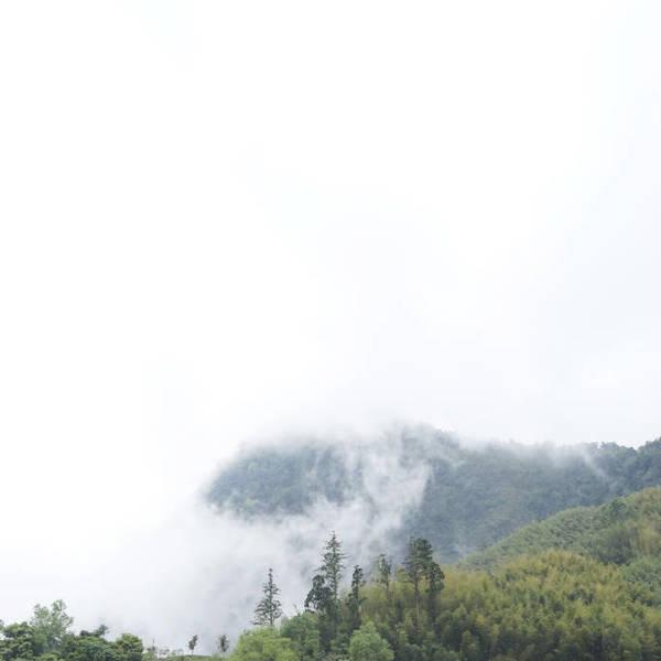 梨山、杉林溪、阿里山