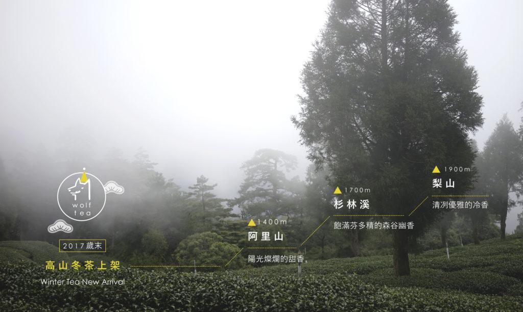 2017冬茶